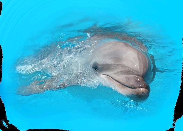 Дельфинарий (Коктебель)